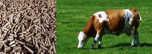 Planta de fabricación de piensos para ganado