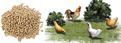 Línea de producción de piensos para pollos
